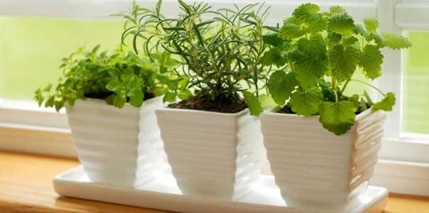 16 продуктов, которые можно вырастить дома