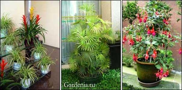 Воздействие комнатных растений на человека