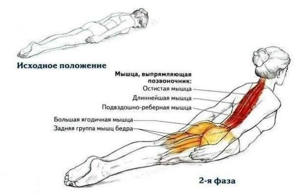 Упражнения для стройности и идеальной осанки