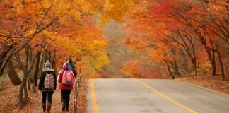 Здоровье осенью