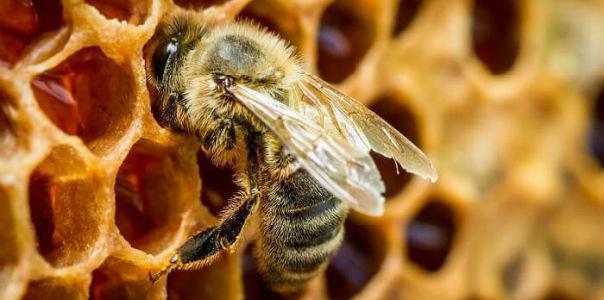 Целебные свойства пчелиного подмора: магическая эффективность!
