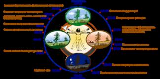 Часы работы Вашего организма