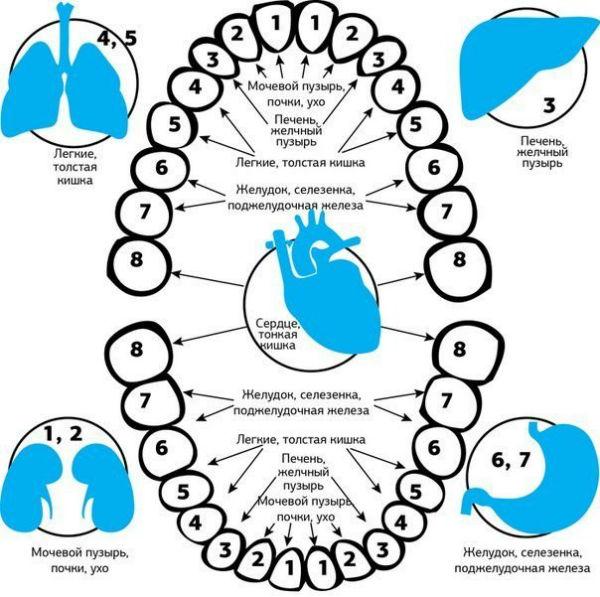 Диагностика внутренних органов по зубам
