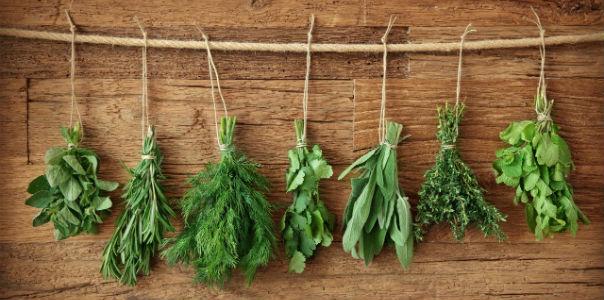 Травы на Вашей кухне, улучшающие пищеварение