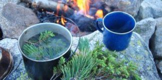 Чай из еловых иголок