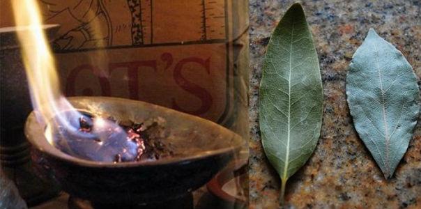 Запах лаврового листа
