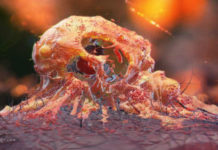 Создано антитело, заставляющее иммунные клетки уничтожать рак